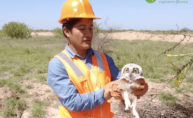 Rescate, así como reubicación de flora y fauna silvestre