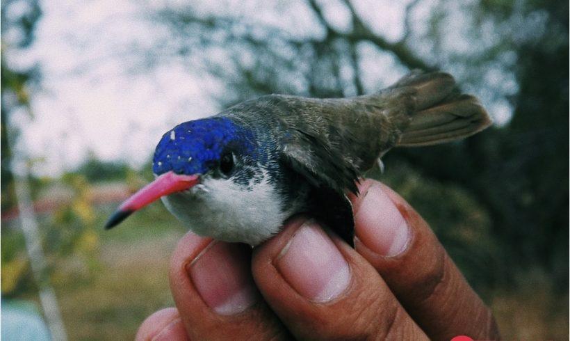 Estudios sobre fauna silvestre