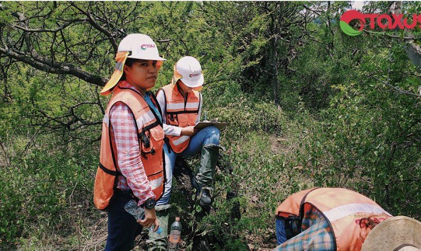 Dictámenes de uso de suelo forestal