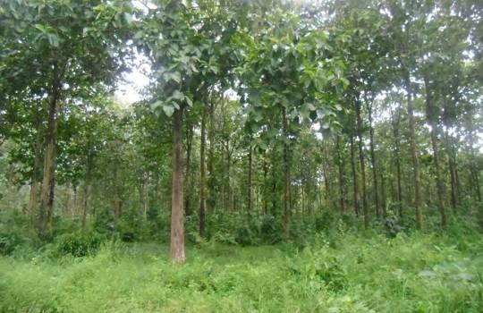 bosques-fao-540x350