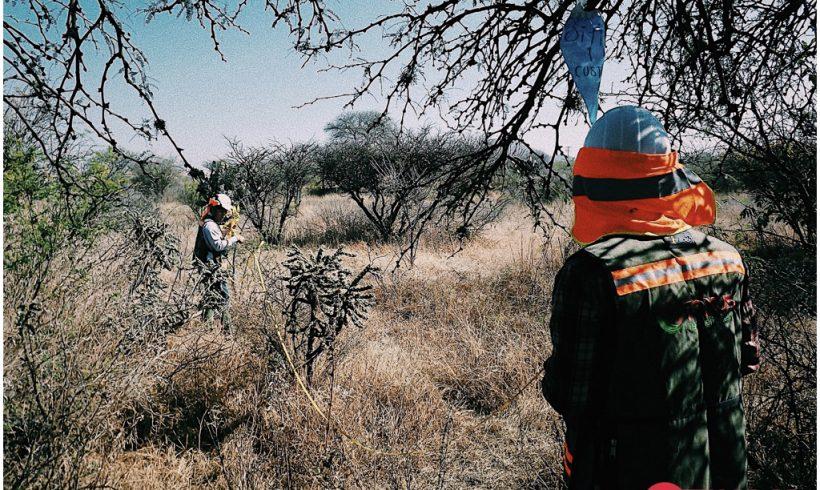 Elaboración y ejecución de estudios de cambio de uso de suelo en terrenos forestales